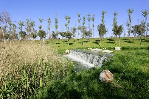 沣东•沣河生态景区